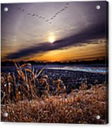 Late For Dinner Acrylic Print by Phil Koch