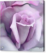 Lavender Rose Flower Portrait Acrylic Print by Jennie Marie Schell
