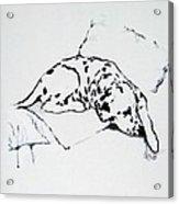 Lazy Day Acrylic Print by Jacki McGovern