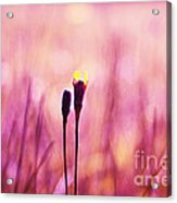 Le Centre De L Attention - Pink S0301 Acrylic Print by Variance Collections