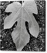 Leaf On Bark Acrylic Print by Andrew Brooks