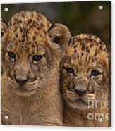 Lean On Me Acrylic Print by Ashley Vincent