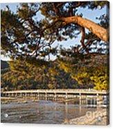 Leaning Pine Tree Arashiyama Kyoto Japan Acrylic Print by Colin and Linda McKie