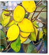 Lemons Acrylic Print by Debi Starr