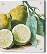 Lemons Acrylic Print by Pierre Joseph Redoute