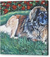 Leonberger Acrylic Print by Lee Ann Shepard