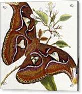 Lepidoptera Acrylic Print by Edward Donovan
