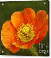 Les Fleurs Acrylic Print by Darren Fisher