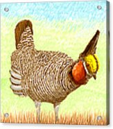 Lesser Prairie Chicken Acrylic Print by Jack Pumphrey