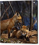 Lets Play Together Acrylic Print by Thomas Young