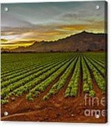 Lettuce Sunrise Acrylic Print by Robert Bales