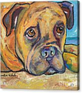 Lexie Acrylic Print by Pat Saunders-White