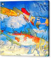 Life Is But A Dream - Koi Fish Art Acrylic Print by Sharon Cummings