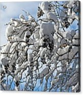 Lilac In Winter Acrylic Print by Michele Myers
