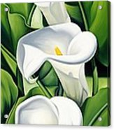 Lilies Acrylic Print by Catherine Abel
