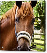 Lilly Portrait Acrylic Print by Angela Doelling AD DESIGN Photo and PhotoArt