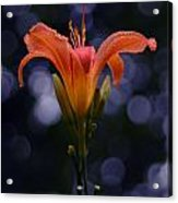 Lily After A Shower Acrylic Print by Raymond Salani III
