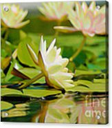 Lily Pond Acrylic Print by  Fli Art