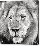 Lion King Acrylic Print by Adam Romanowicz