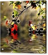 Liquidambar In Flood Acrylic Print by Avalon Fine Art Photography