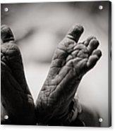 Little Feet Acrylic Print by Adam Romanowicz