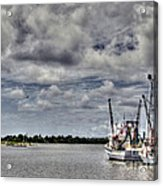 Little Shrimpers   Acrylic Print by Benanne Stiens