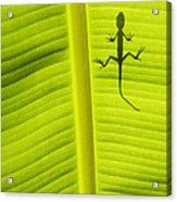 Lizard Leaf Acrylic Print by Tim Gainey