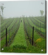 Lone Figure In Vineyard In The Rain On The Mission Peninsula Michigan Acrylic Print by Mary Lee Dereske