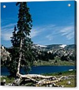 Lone Tree At Pass Acrylic Print by Kathy McClure