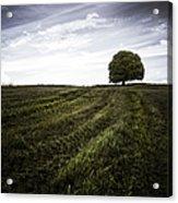 Lone Tree  Acrylic Print by John Farnan