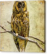 Long Eared Owl Acrylic Print by Ray Downing