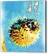 Long-spine Fish Acrylic Print by Daniel Janda