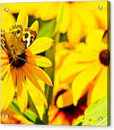 Lost In Yellow Acrylic Print by Kevin Read