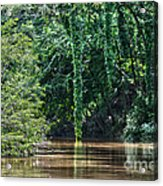 Louisiana Bayou Toro Creek Swamp Acrylic Print by D Wallace