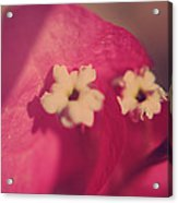 Loved Acrylic Print by Laurie Search