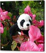 Lovely Pink Flower Acrylic Print by Ausra Huntington nee Paulauskaite