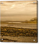 Low Tide Cape Porpoise Maine Acrylic Print by Bob Orsillo
