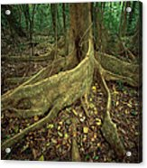 Lowland Tropical Rainforest Acrylic Print by Ferrero-Labat