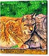 Lynx Acrylic Print by George Rossidis