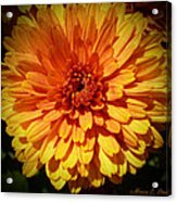 M Bright Orange Flowers Collection No. Bof8 Acrylic Print by Monica C Stovall