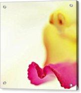 M Petal Acrylic Print by Suradej Chuephanich