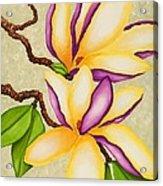Magnolias Acrylic Print by Carol Sabo