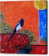 Magpie Singing At The Bath Acrylic Print by Xueling Zou