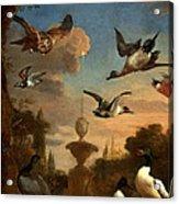 Mallard Golden Eagle Wild Fowl In Flight Acrylic Print by Melchior de Hondecoeter