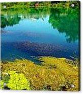 Mammoth Springs Water Vegetation Acrylic Print by Cindy Croal