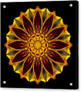 Marigold Flower Mandala Acrylic Print by David J Bookbinder