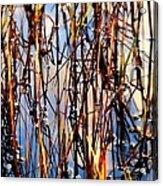 Marshgrass Acrylic Print by Karen Wiles