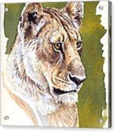 Massai Queen Acrylic Print by Aaron Blaise