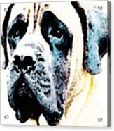 Mastif Dog Art - Misunderstood Acrylic Print by Sharon Cummings