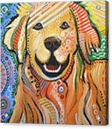 Max ... Abstract Dog Art...golden Retriever Acrylic Print by Amy Giacomelli